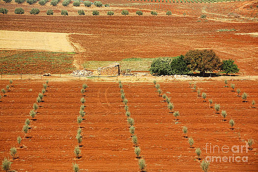 Chuck Kuhn - Morocco Landscape I