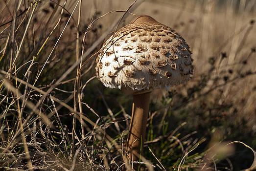 Mushroom  by Mariana Atanasova