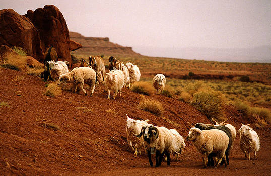 Robert Lozen - Navajo Sheep
