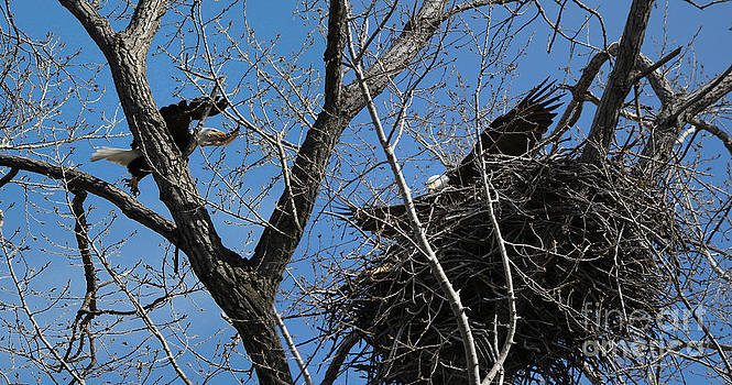 Nesting time by Lori Tordsen