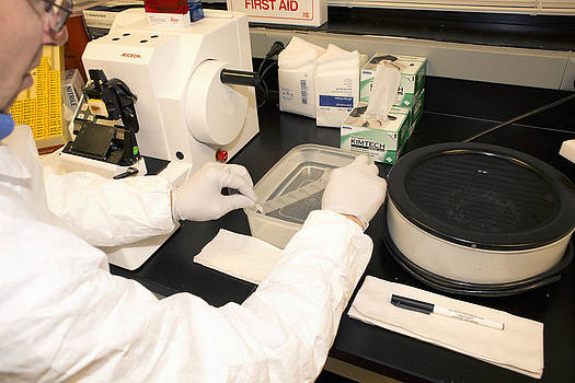 Neuropathologist At Work by Science Stock Photography
