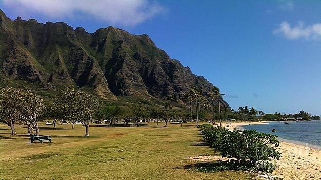 Oahu Beach Park by Brigitte Emme