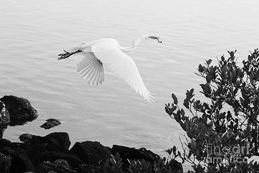 Deborah Benoit - Off to the nest