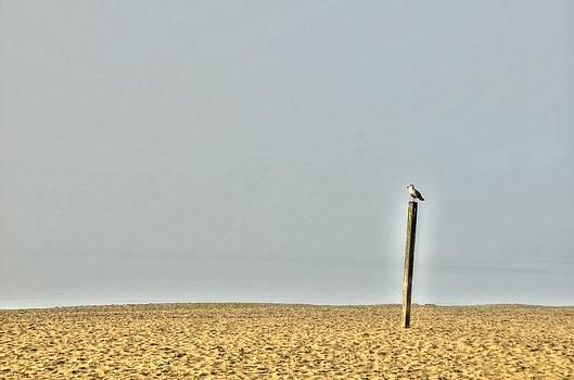 On The Beach by Doug Farmer