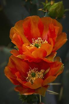 Saija  Lehtonen - Orange You Beautiful