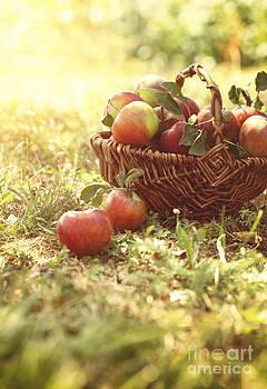 Mythja  Photography - Organic apples in summer grass