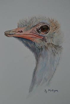 Ostrich  by Betty Mulligan