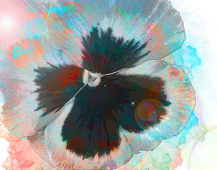 Pansy by Louise Grant