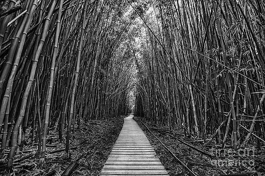 Jamie Pham - Path to Zen