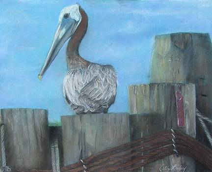 Pelican at Hatteras Ferry by Cathy Lindsey