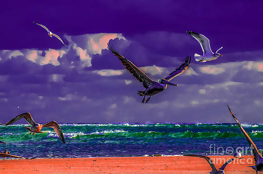 Perfect Flight In Color by Crissy Anderson