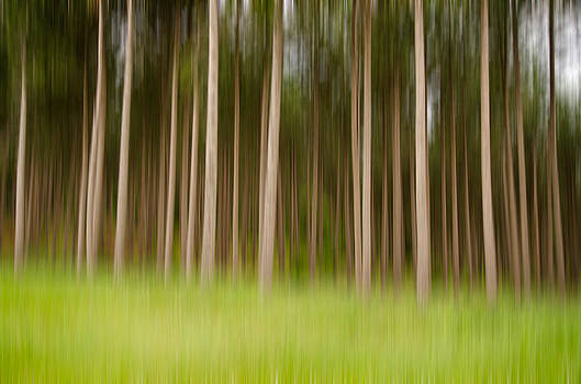 Pernicious Pines by Christopher L Nelson