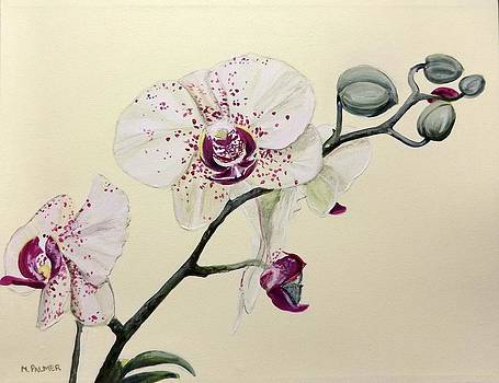 Phalaenopsis Black Panther Orchid by Mary Palmer