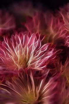Cindy Boyd - Pink Flower Lightning