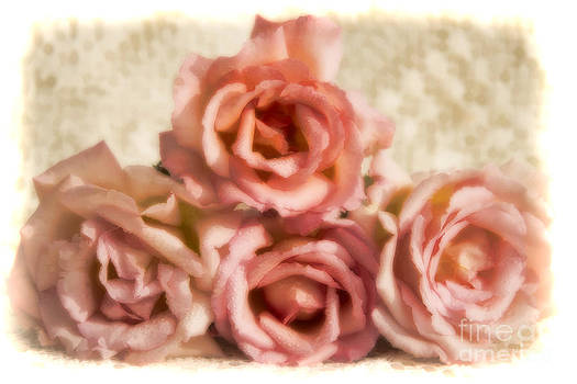 Pink roses by Gry Thunes