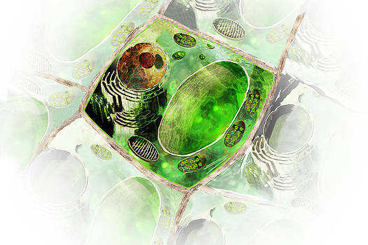 Plant Cell by Carol and Mike Werner