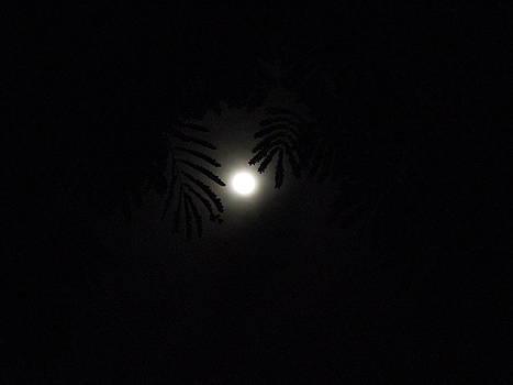 Poonam's Night by Prakash Leuva