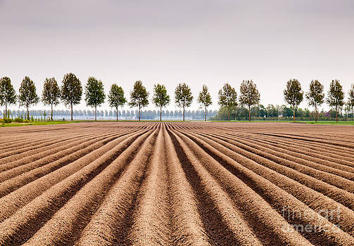Potato Field by David Hanlon