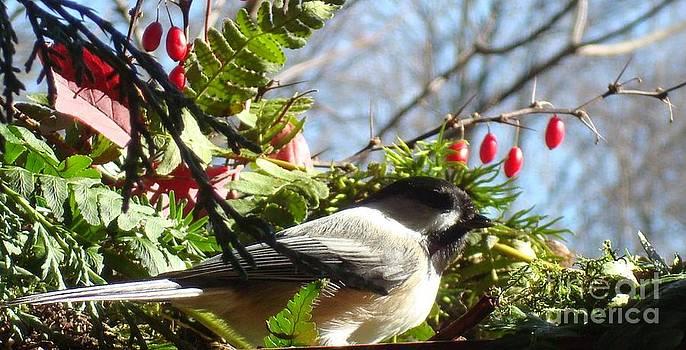 Pretty bird by Virginia Pakkala