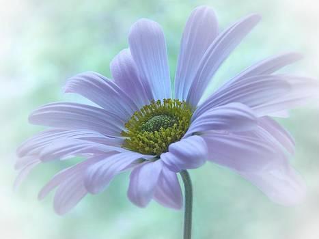 Nina Bradica - Purple Daisy