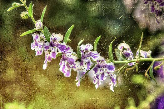 Purple Iris by Ken Reardon