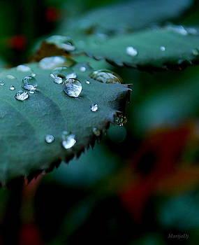 Rain by Marija Djedovic