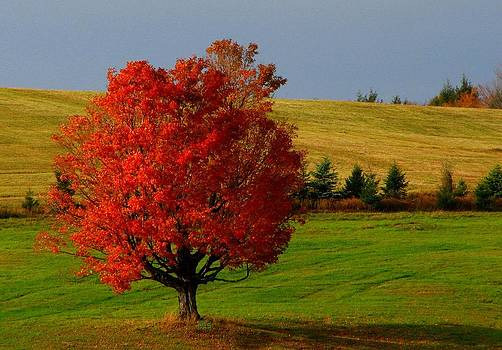 Red Tree by June Lambertson