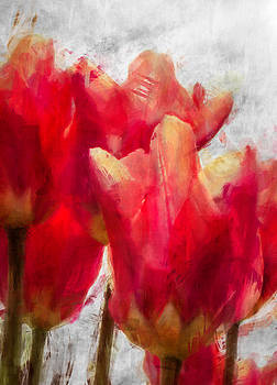 Red Tulips by Celso Bressan