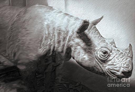 Gregory Dyer - Rhino