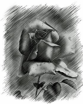 Rose by Larry Stolle