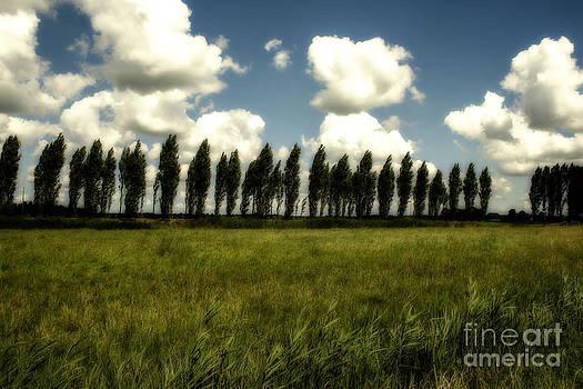 Patricia Hofmeester - Row of trees in the wind