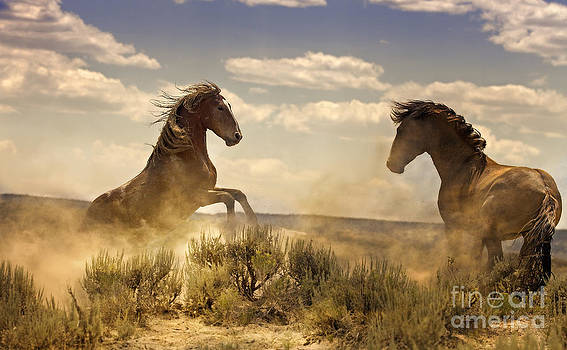 Ruckus On The Range by Robin  Wadhams