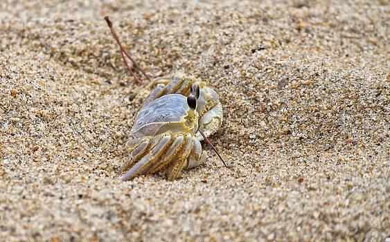 Sand Crab by Carolyn Ricks