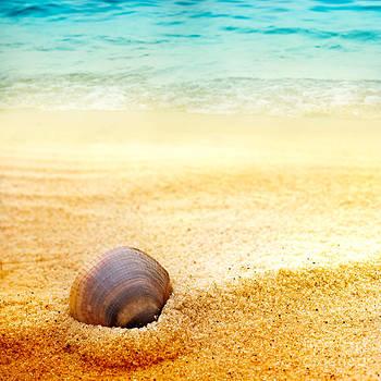 Mythja  Photography - Sea shell on fine sand