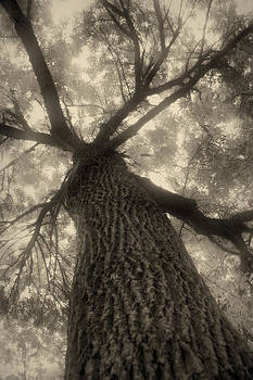 Sepia tree by Peter Fodor
