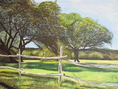 Shady Oak Trees by Melissa Torres