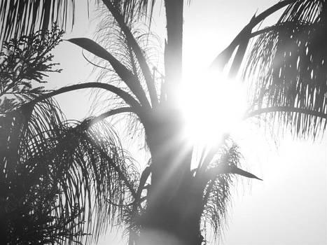 Silhouette by Austin Ellefson