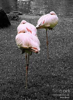 Cheryl Young - Sleeping Flamingos