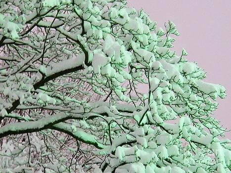 Judy Via-Wolff - Snow Blossoms