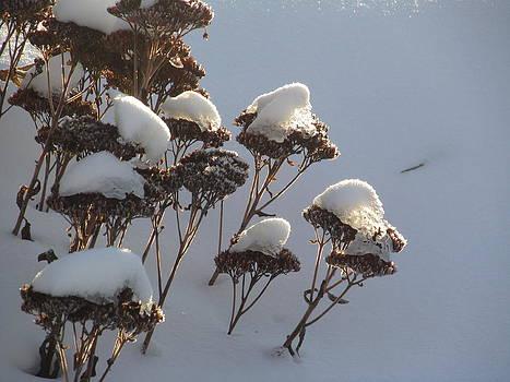 Alfred Ng - snow gardens