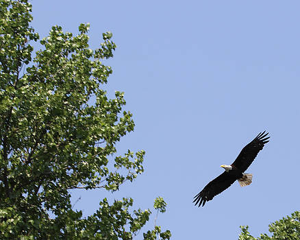 Soaring by Bruce  Morrell