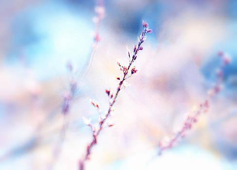 Soft and Dreamy by Heather Bridenstine