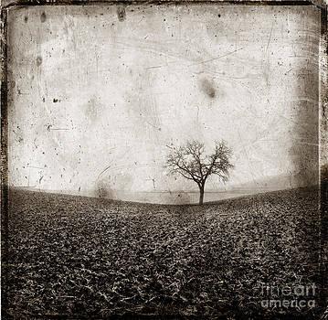 BERNARD JAUBERT - Solitary tree in Limagne landscape. Auvergne. France