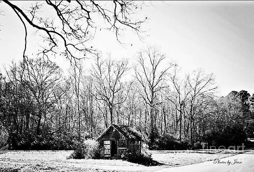 Solitude  by Jinx Farmer