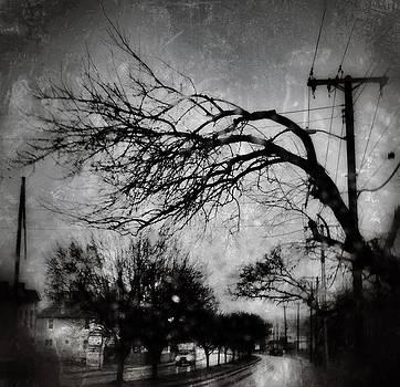 Spooky Tree by Toni Martsoukos
