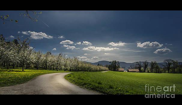 Spring Colors by Bruno Santoro