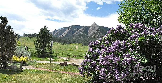 Lilacs And Flatirons Boulder Colorado by R Mahlouji