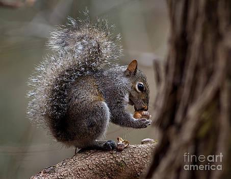 Squirrel II by Douglas Stucky