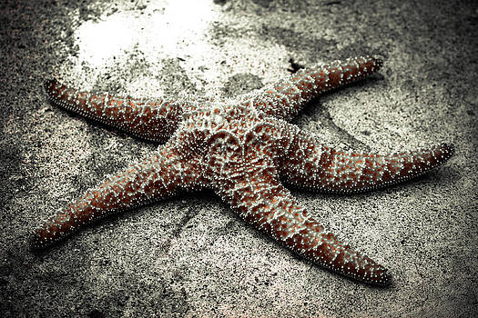 Star Fish by San Gill