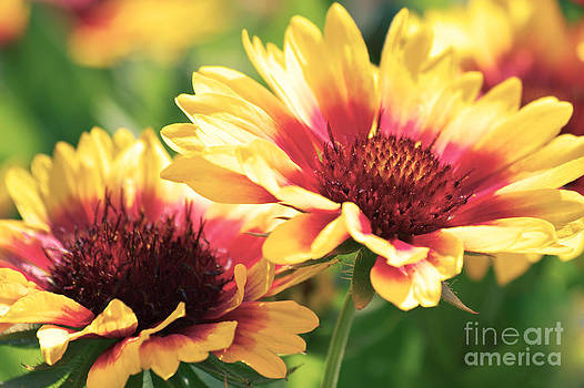 Angela Doelling AD DESIGN Photo and PhotoArt - Summer colors